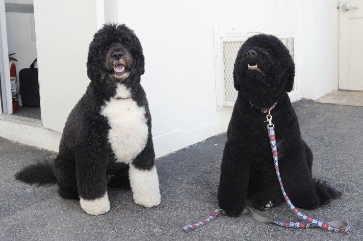 σκυλάκια Ομπάμα